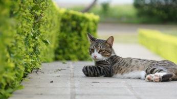 午後的貓~慵懶的享受陽光!