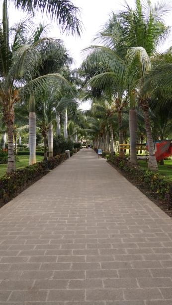 整條通往沙灘跟飯店的道路被樹真光光了