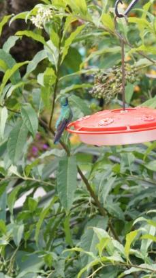 一旁還可賞蜂鳥!