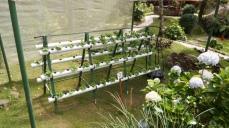 小小的水耕蔬菜!